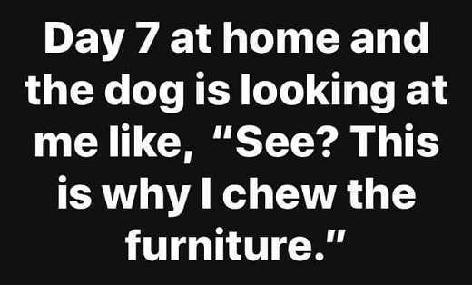 day 7 at home dog is like see this is why i chew the furniture