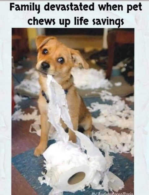 family devasted dog chewed up life savings toilet paper