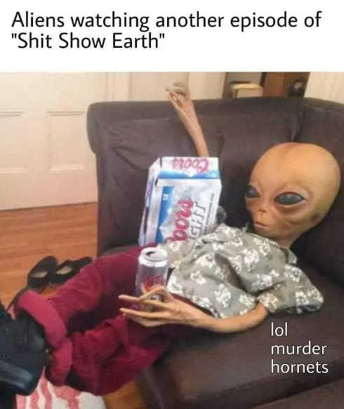 aliens watching another episode of shit show earth lol murder hornets