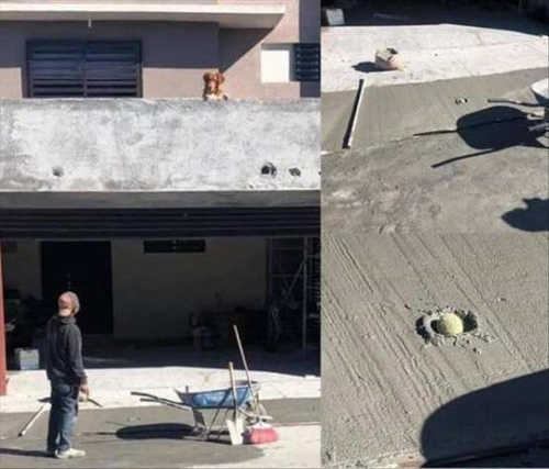 dog drops ball in cement roof top