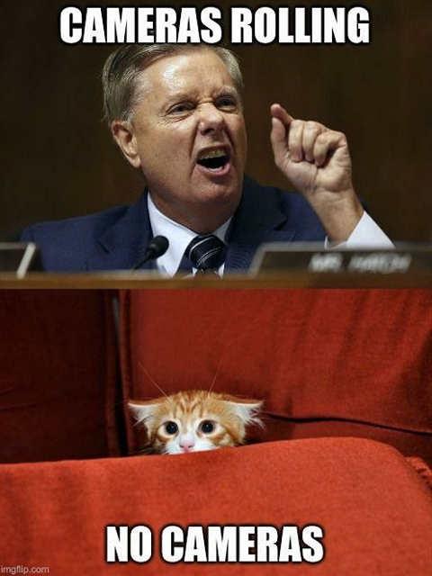 lindsay graham cameras rolling fierce kitten behind scenes