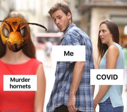me guy looking at murder hornets ignoring covid girl