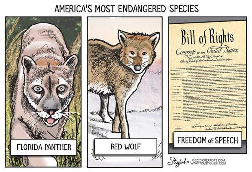 americas most endangered species florida panther red wolf bill of rights