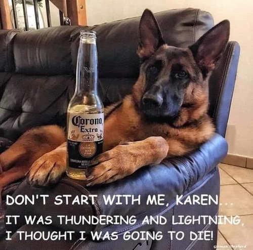 german shepard dog drinking corona extra dont start karen thunderstorm