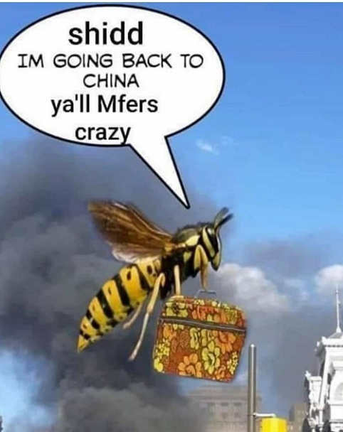murder hornets going back to fina you mfers crazy