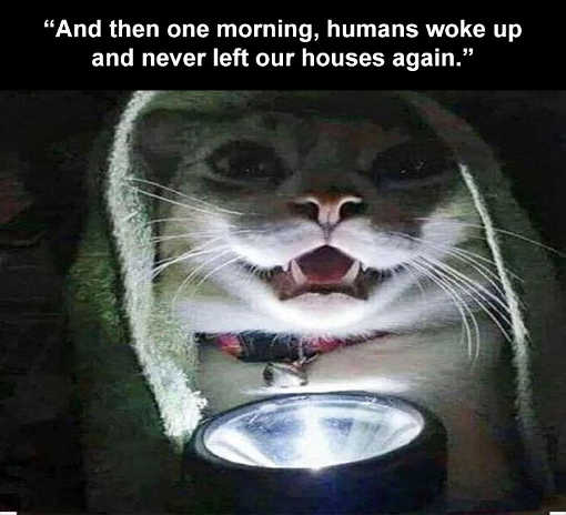 cat flashlight story then one morning humans woke up and never left houses again