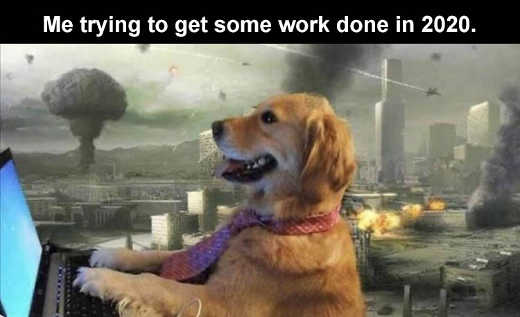 dog laptop me trying to get some work done in 2020 explosions