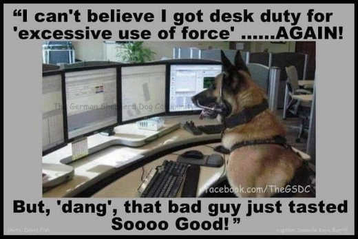 german shepard cant believe got desk duty for excessive use of force bad guy tasted good