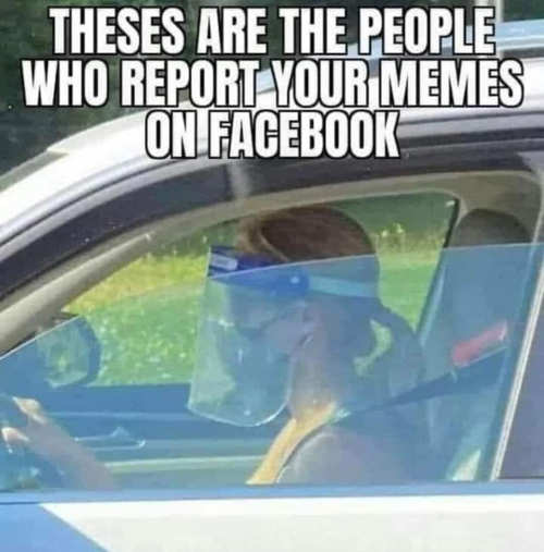 these are people report your memes on facebook face shield driving in car