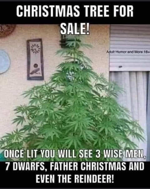 christmas tree for sale pot see 3 wise men reindeer