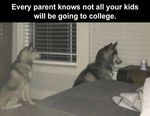 every parent knows not all kids going to college huskies looking out window