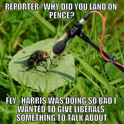 reporters fly why did you land pence head harris so bad wanted liberals something to talk about interview