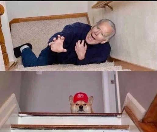joe biden fall down stairs dog maga hat