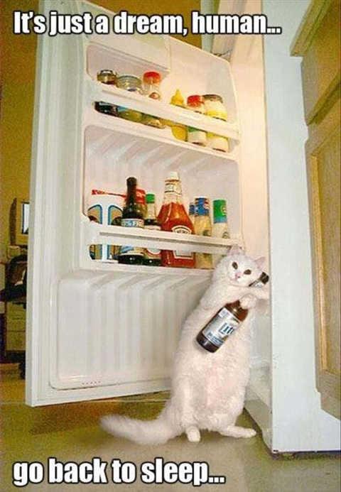 cat beer refrigerator just dream go back to sleep