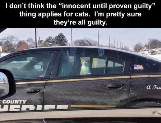 no cats innocent until proven guilty cop car