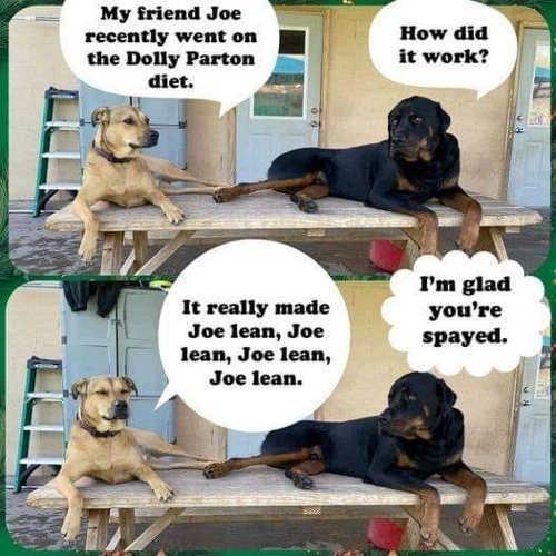 friend joe lean dolly parton dogs