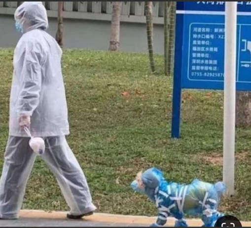 mask dog walking covid