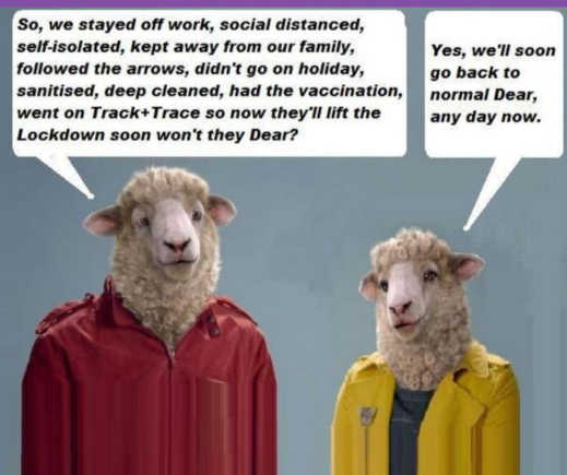 sheep social distance masks isolate vaccinate normal any day now