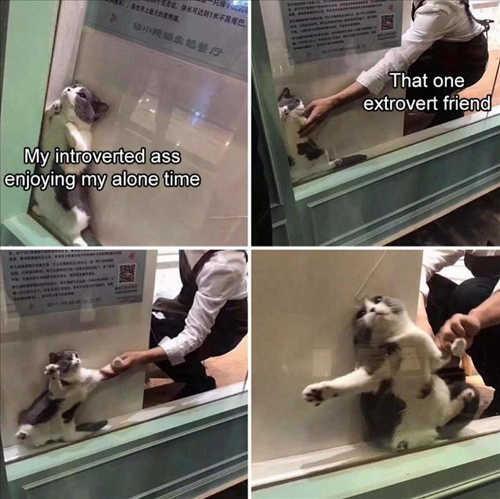 cat introvert extrovert friend pulling