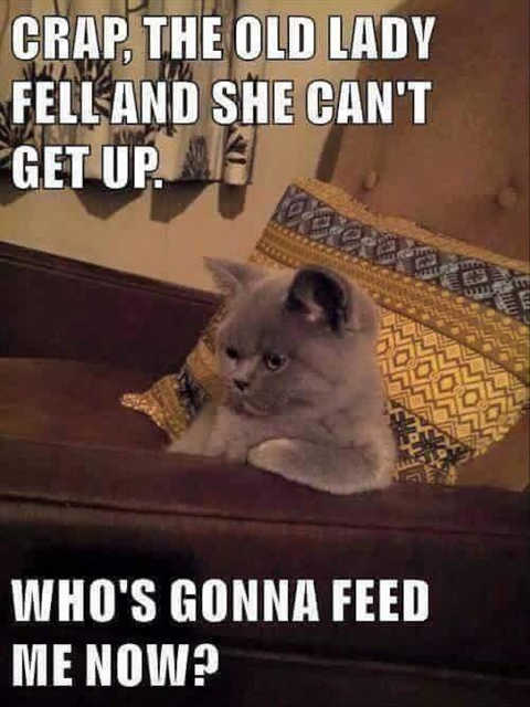 crap cat old lady fell cant get up whos going to feed