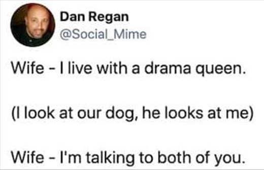 tweet dan regan wife dog drama queen