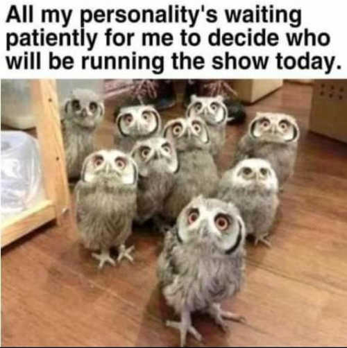 all my personalities waiting to see who runs show today owls
