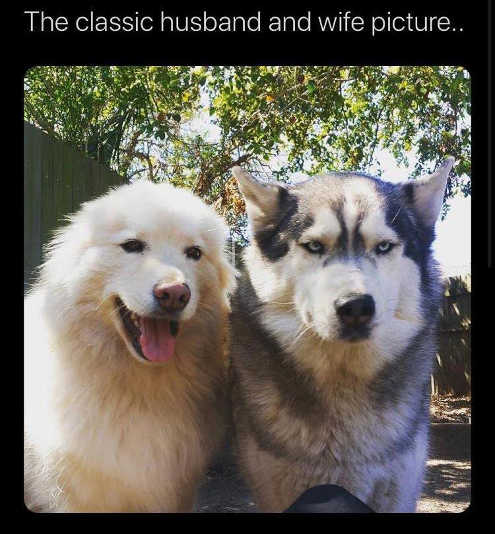 dogs classic husband wife picture smile frown