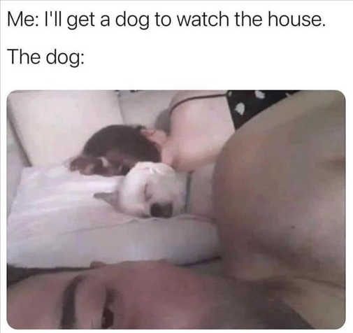 get dog to watch house sleeping bed