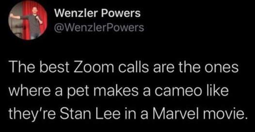 tweet powers best zoom call pet stan lee appearance
