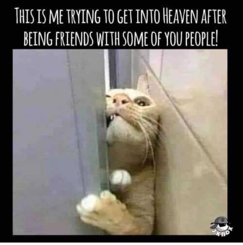 cat me trying to get into heaven friends with some of you
