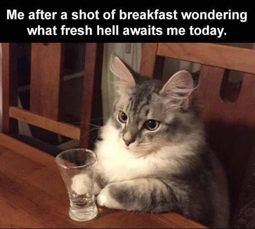 cat shot breakfast fresh hell today