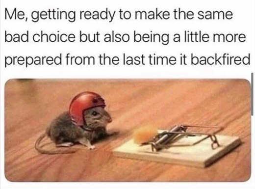mouse helmet mousetrap bad decisions