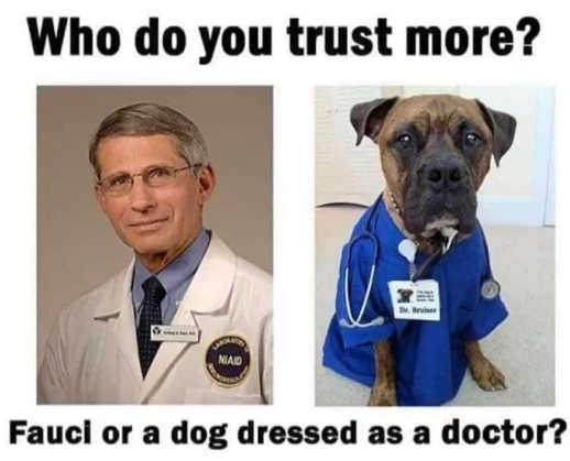 question trust more dr fauci dog dresses as doctor