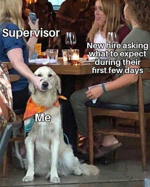 supervisor dog new hire first few days