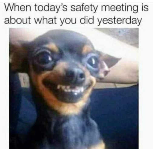 when todays safety meeting about what you did yesterday dog