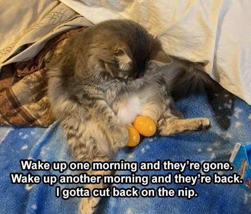 cat wake up balls gone back eggs lay off catnip