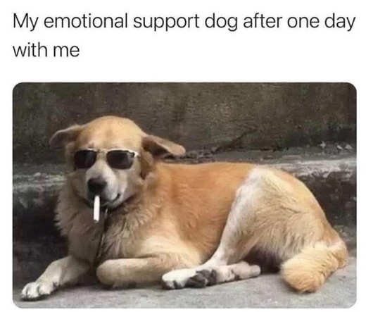 my emotional support dog one day cigarette sunglasses