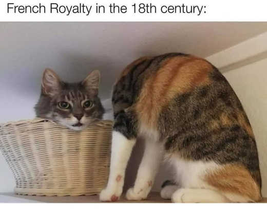 cats head french royalty in 18th century