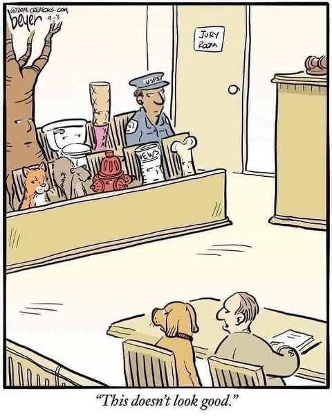 dog jury postman cat squirrel stick lawyer
