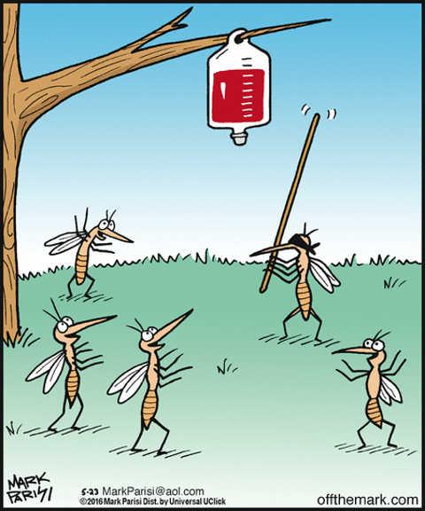 mosquito pinnata blood