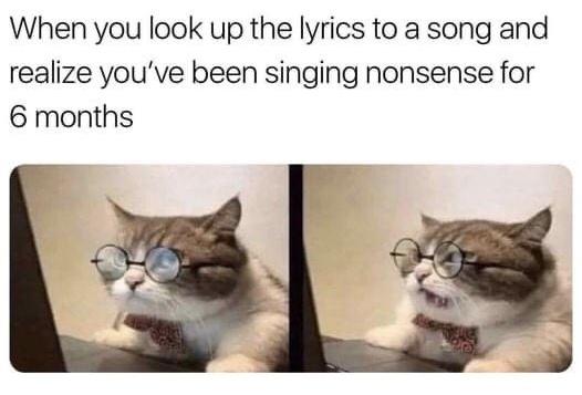 cat read lyrics song realize singing nonsense