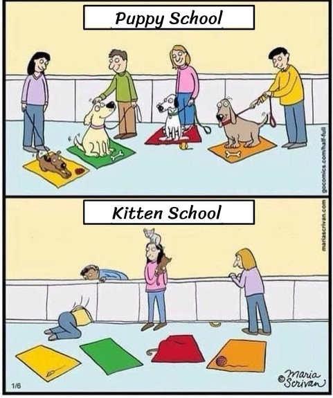puppy vs kitten school