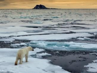 Eisbaer, Thalarctos maritimus, polar bear