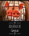 porco4