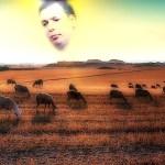 100 ovaca i predsednik, večiti