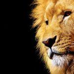 Pokušao da prošvercuje lava iz Albanije