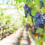 MOŽDA IMA NADE ZA NAS: Nenadu Stojanoviću iz Male Drenove je san da ostane na selu i da se bavi vinogradarstvom
