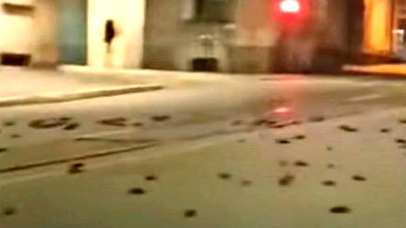 Kiša mrtvih ptica padala sa neba: ZASTRAŠUJUĆI PRIZOR IZ NOVOGODIŠNjE NOĆI