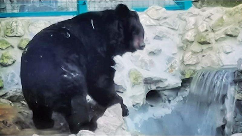 Medved Uroš izašao iz pećine i dao prognozu kakva je godina pred nama
