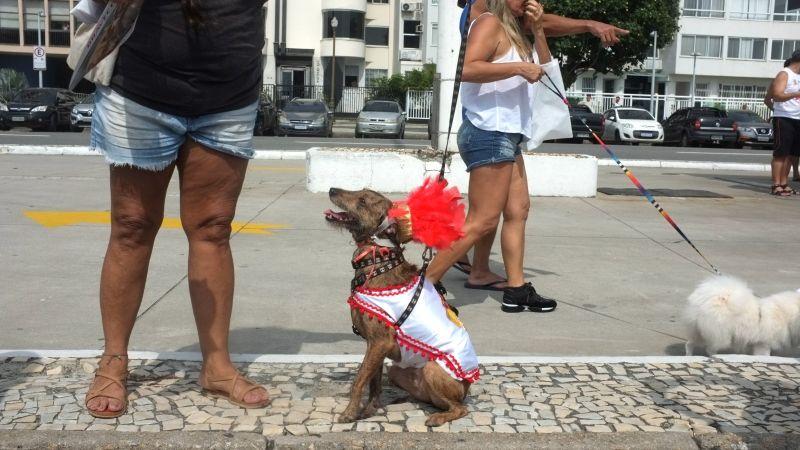 U Riju de Žaneiru održan karneval za pse
